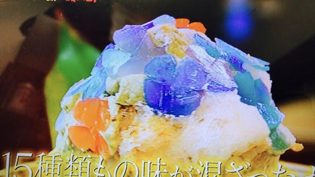 いちょうの木「紫陽花」