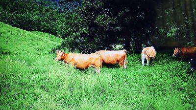 熊本阿蘇あか牛
