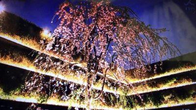 東急プラザ銀座の屋上の桜