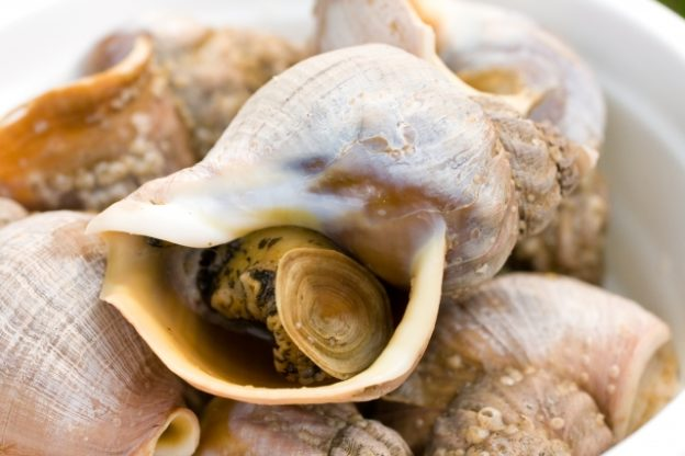 の 食べ 貝 方 つぶ