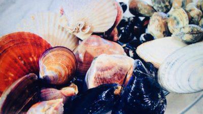具材は8種類の貝