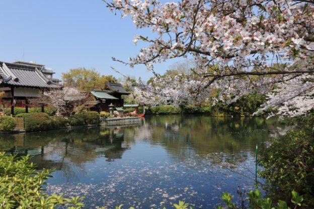 京都の桜の穴場スポット!二条城の神泉苑