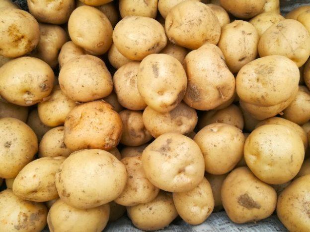 静岡県の三方原馬鈴薯!浜松の新ジャガイモ